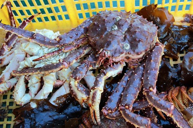 Камчатский краб и деликатесы - туры и экскурсии на Камчатку