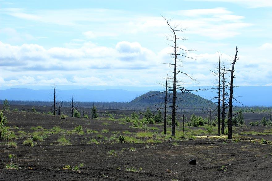 вулкан Тобачик - мертвый лес - туры и экскурсии на Камчатке