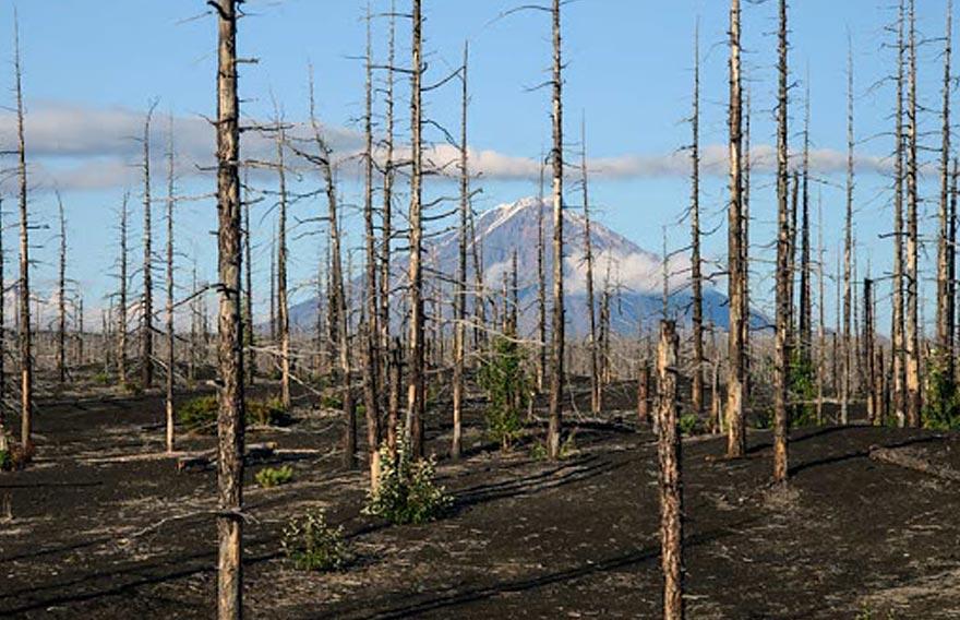 Через мертвый лес - туры и экскурсии на Камчатку