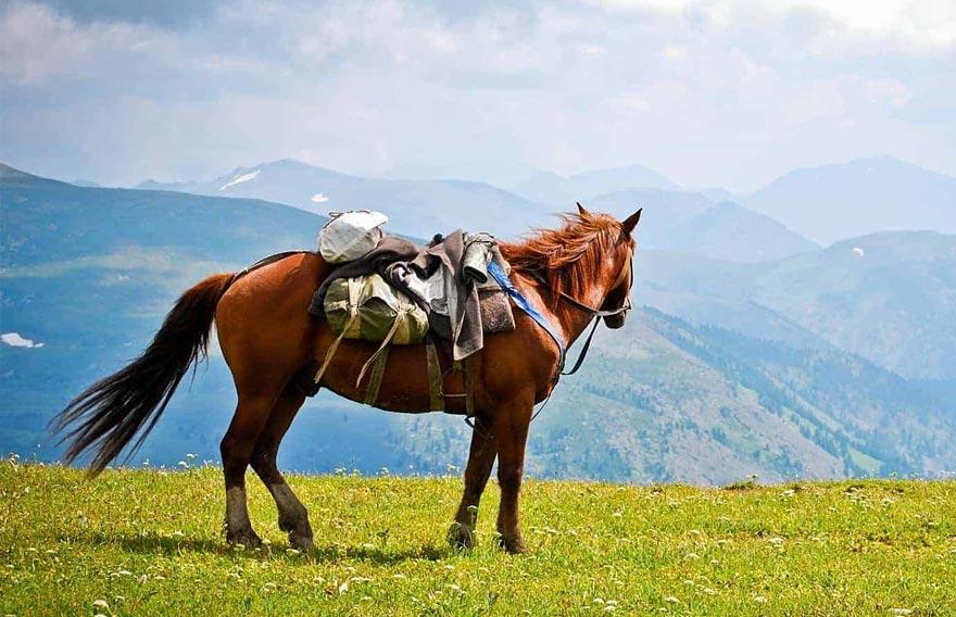 Конная прогулка к сопкам Утюгам на Камчатке - туры и экскурсии на Камчатке