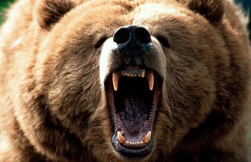 Охота на Камчатского Бурого Медведя - туры и экскурсии на Камчатке