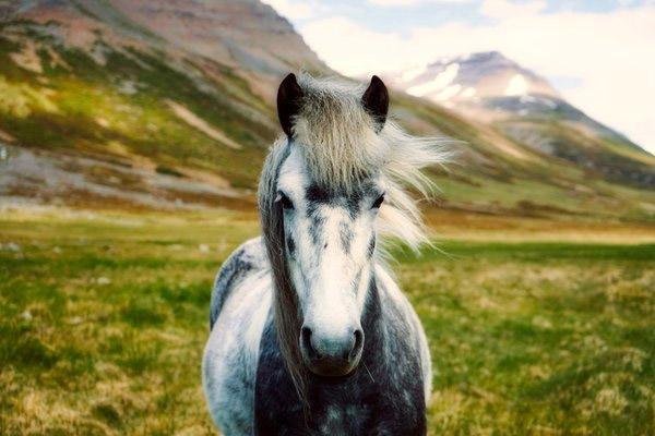 Тур на лошадях в долину Налычево на Камчатке 6 дней - туры и экскурсии на Камчатке