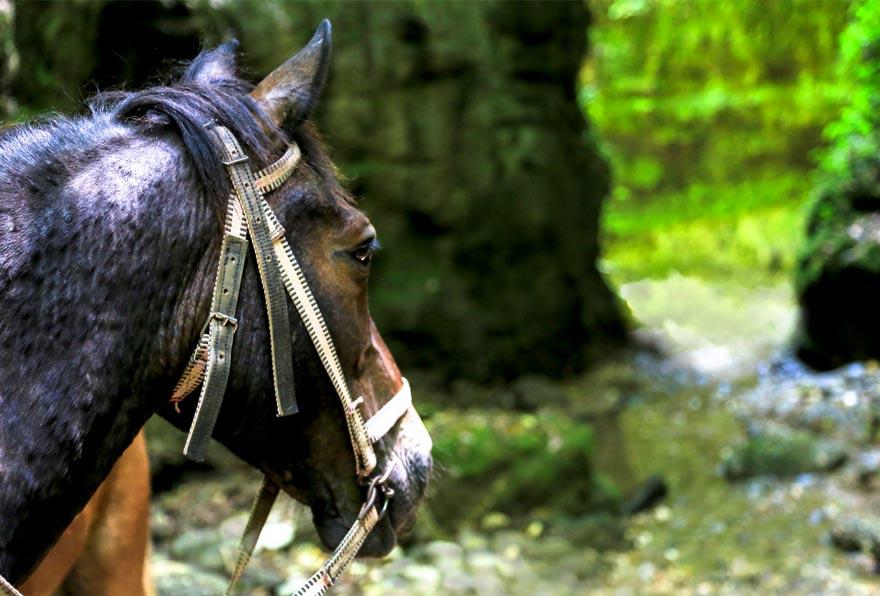 Прогулка на лошадях к сопке Треугольник - туры и экскурсии на Камчатке