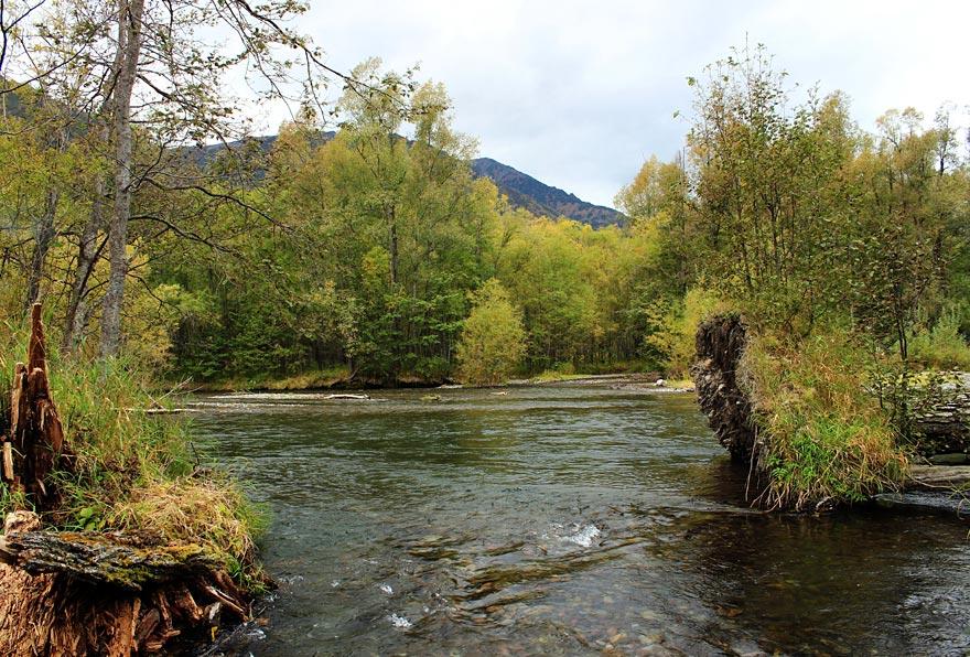 На лошадях по протокам, ручьям и остовам реки Авача на Камчатке - туры и экскурсии по Камчатке