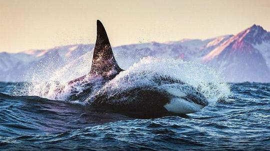 Морские экскурсии и туры на Камчатке