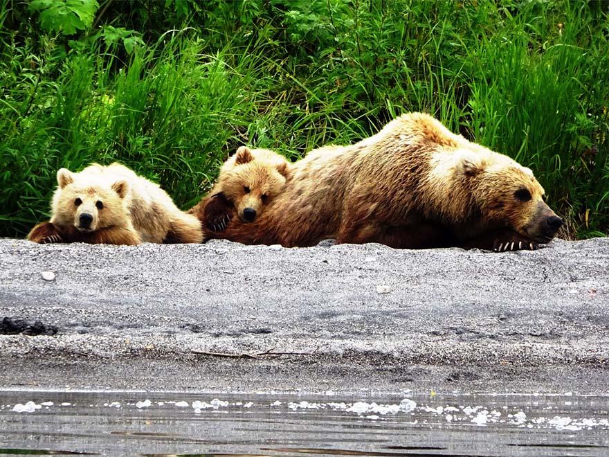 Медведи - озеро Курильское - туры и экскурсии на Камчатке
