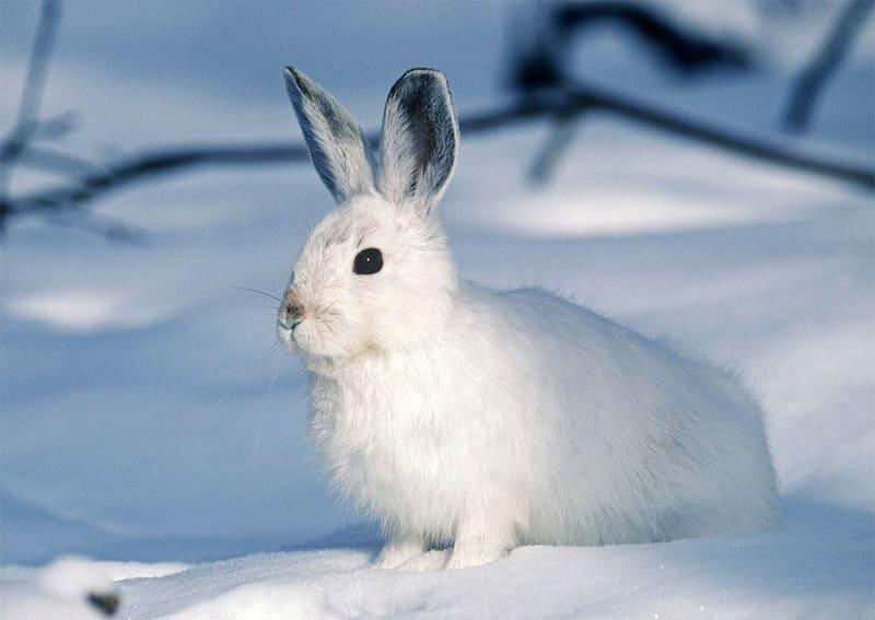 Заяц - туры и экскурсии на Камчатку